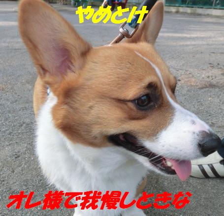 CIMG5064.jpg