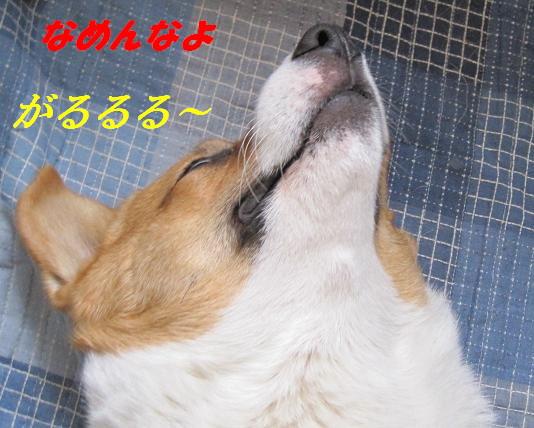IMG_3209.jpg