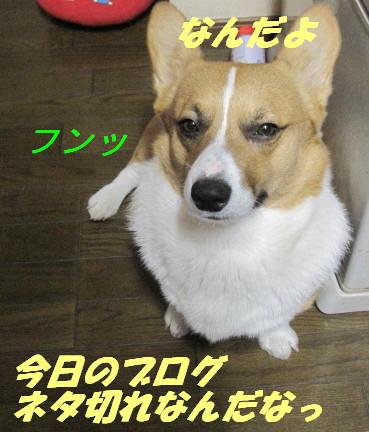 IMG_4577.jpg
