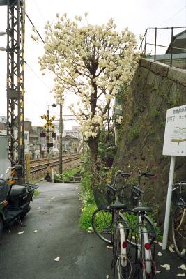 20120403_Onomichi_ColorSkopar28_ProFOTO100_1.jpg