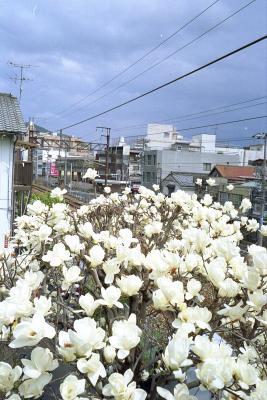 20120403_Onomichi_ColorSkopar28_ProFOTO100_3.jpg