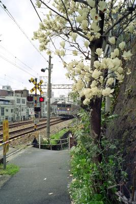 20120403_Onomichi_ColorSkopar28_ProFOTO100_7.jpg