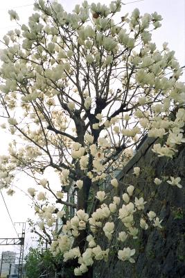 20120403_Onomichi_ColorSkopar28_ProFOTO100.jpg