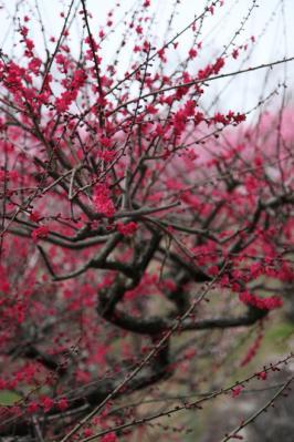 2012_03_25_BotanicalGarden00002.jpg