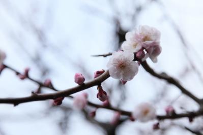 2012_03_25_BotanicalGarden00004.jpg
