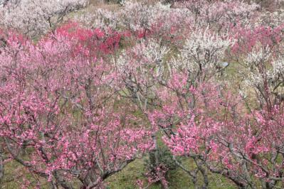 2012_03_25_BotanicalGarden00005.jpg