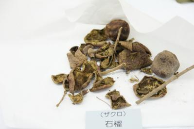 2012_03_25_BotanicalGarden00014.jpg