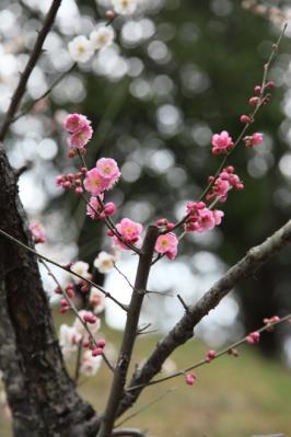 2012_03_25_BotanicalGarden00016.jpg