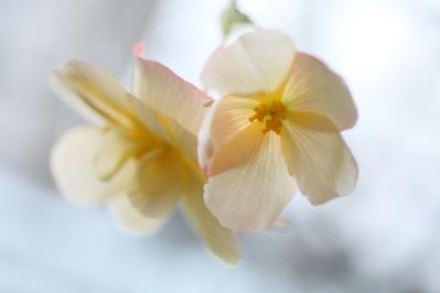 2012_03_25_BotanicalGarden00021.jpg