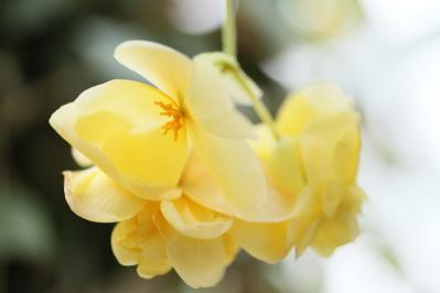 2012_03_25_BotanicalGarden00022.jpg