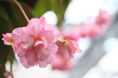 2012_03_25_BotanicalGarden00023.jpg