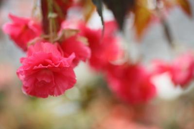 2012_03_25_BotanicalGarden00026.jpg