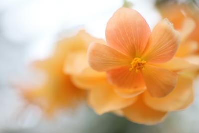2012_03_25_BotanicalGarden00027.jpg
