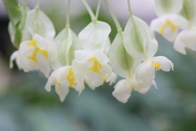 2012_03_25_BotanicalGarden00031.jpg