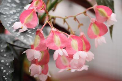 2012_03_25_BotanicalGarden00033.jpg