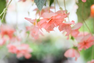 2012_03_25_BotanicalGarden00035.jpg