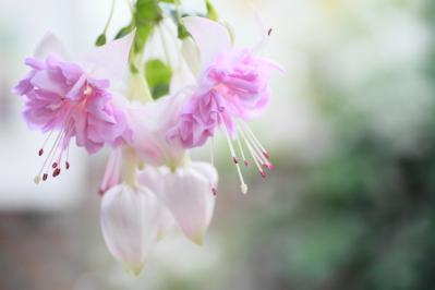 2012_03_25_BotanicalGarden00060.jpg