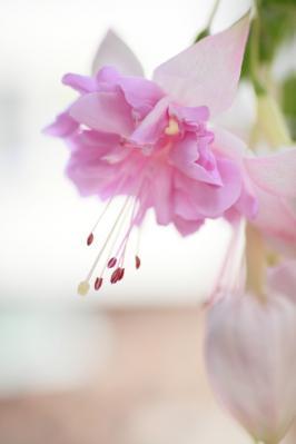 2012_03_25_BotanicalGarden00061.jpg