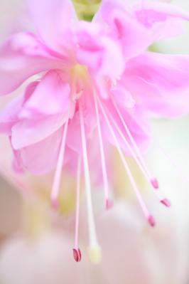 2012_03_25_BotanicalGarden00062.jpg
