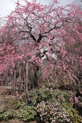 2012_03_25_BotanicalGarden00077.jpg