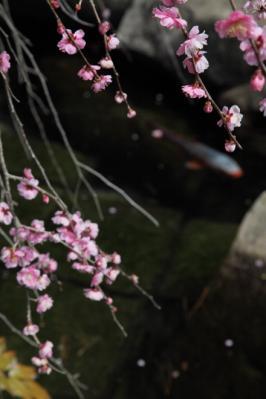 2012_03_25_BotanicalGarden00080.jpg