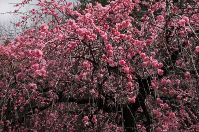 2012_03_25_BotanicalGarden00082.jpg