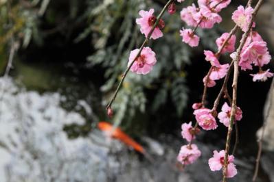 2012_03_25_BotanicalGarden00086.jpg