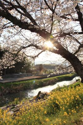 2012_04_08_IwakuniOukan00002.jpg