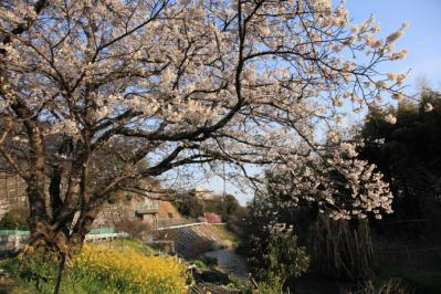 2012_04_08_IwakuniOukan00005.jpg