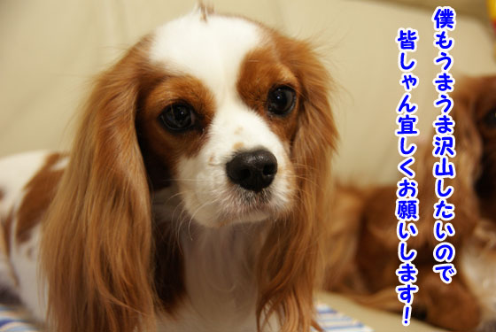 20110102_014.jpg