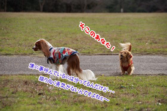 2011年01月08日_042_edited-1
