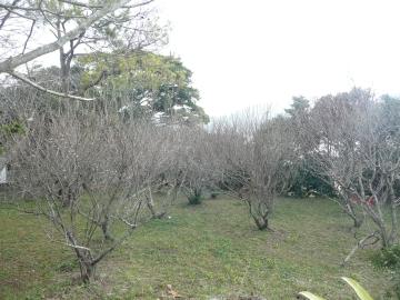20110201002.jpg