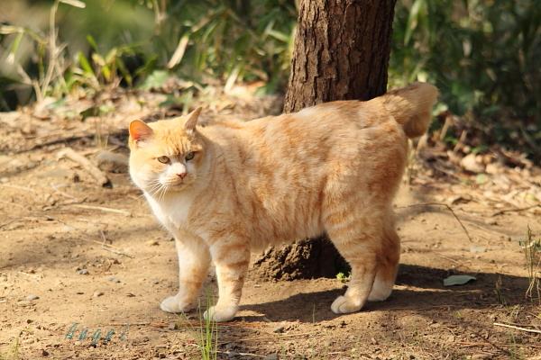ネコ(118)