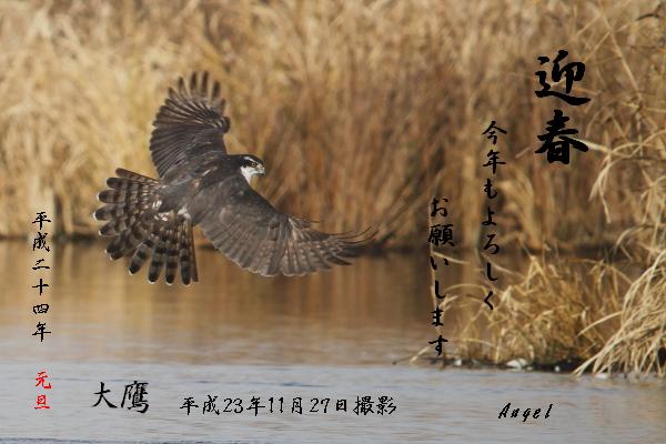 オオタカ(48535)①年賀状