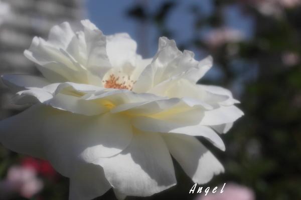 マウントシャスタ(68)