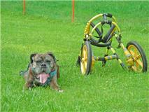 蘭と車椅子