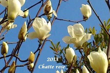 le magnolia
