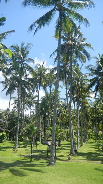 2010.バリ島49