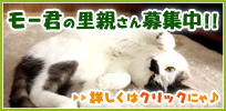 mow_banner.jpg
