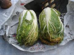 冷凍白菜.JPG