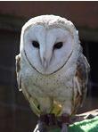img_owl1[1]