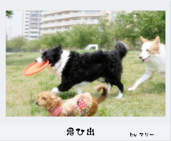IMG_83701.jpg