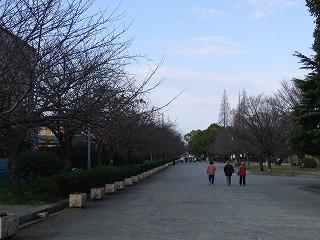桜並木(冬)