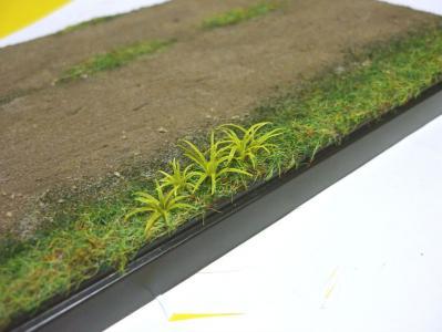 バラン草2