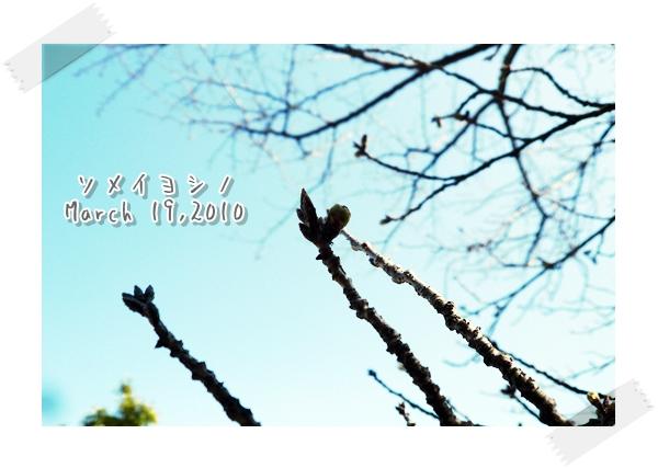 20100319-a.jpg