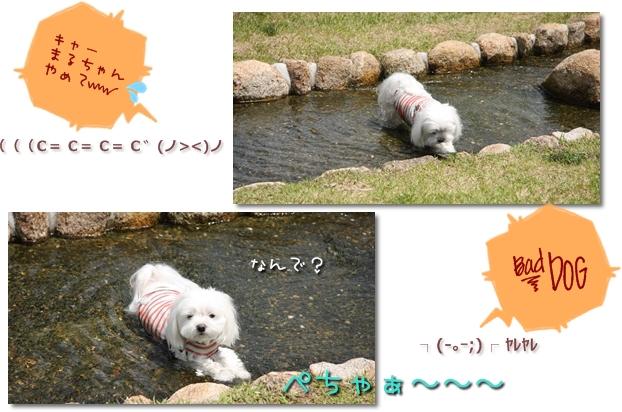 IMG_5173_2010_0504.jpg