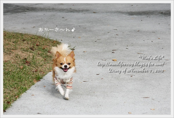 IMG_7874-20101107.jpg