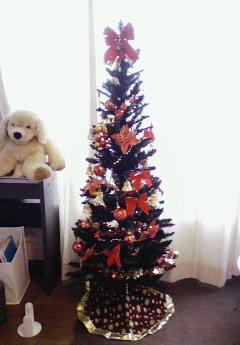 リアルクリスマスツリー