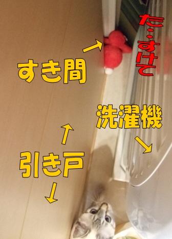 DSCF9433.jpg