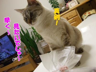 yugiri3.jpg
